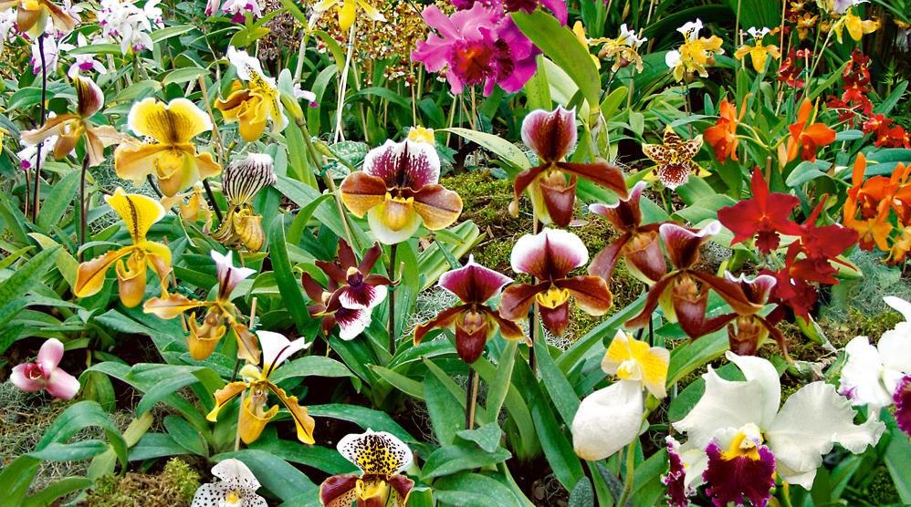 Prendre soin de son orchidée dans les normes