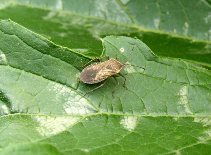 Les insectes du jardin : comment reconnaître et éliminer les squatteurs ?